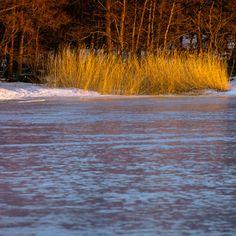 Kaislikko by Lari Huttunen - Purchase prints & digital downloads Online Photo Gallery, Helsinki, Finland, Photo Galleries, Waterfall, Digital, Prints, Outdoor, Image