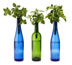 Bottle Stopper Hydroponic Herb Garden Kit - The Green Head