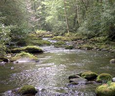 Trout Fishing Stream.