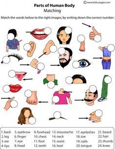 Body Parts Matching - Bildung Kids English, English Words, English Lessons, English Grammar, Learn English, English Language, Teaching Spanish, Teaching English, Spanish Class
