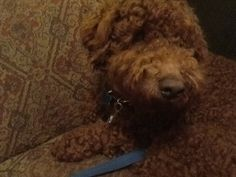 M'y Dog Toby