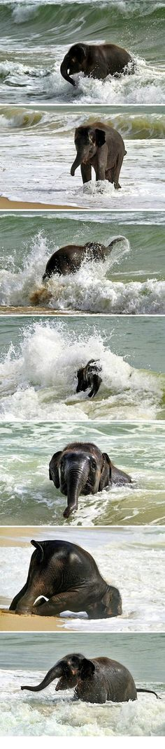 Baby elephant meets the sea for the first time.