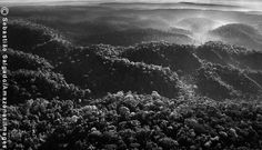 Vista aérea da floresta amazônica, onde o território Awá está localizado. Mesmo com todas as decisões judiciais, ele tem sido desmatado pelos madeireiros e ainda é ocupado por posseiros e grileiros(Foto Sebastião Salgado)