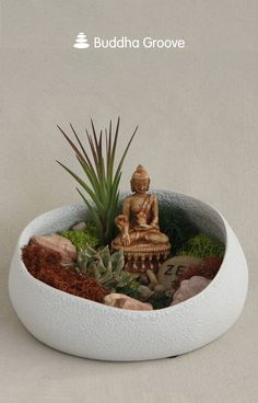 Buddha's Garden Colorful Moss Terrarium with Air Plant