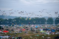 Mess: The clean up of Glastonbury 2015  has begun, with volunteers picking up litter and collecting stray wellies and abandoned tents