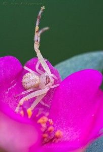 Spiders as Art   John Koerner's Official Blog
