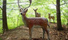 """Lesnická naučná stezka """"Okolo Buchlova"""" – ŤAPKÁME.CZ Kangaroo, Giraffe, Animals, Baby Bjorn, Felt Giraffe, Animales, Animaux, Giraffes, Animal"""