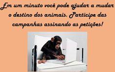 """""""O GRITO DO BICHO"""": Peles de cão usadas para fazer brinquedos"""