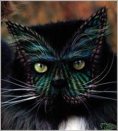 Maquiagem de gatos