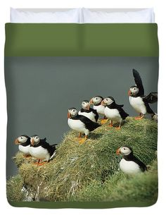 A Group Of Atlantic Puffins Perch Duvet Cover for Sale by Sisse Brimberg Pretty Birds, Love Birds, Beautiful Birds, Animals Beautiful, Cute Animals, Tropical Birds, Colorful Birds, Bird Pictures, Funny Animal Pictures