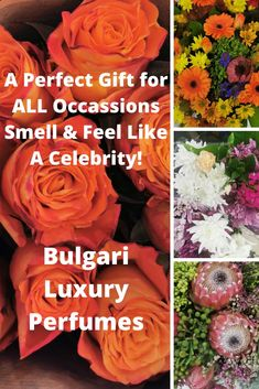 Bulgari Luxury Perfumes are perfect gifts. Spoil yourself because you deserve it! Spoil Yourself, You Deserve It, Be Perfect, Perfume, Luxury, Celebrities, Gifts, Celebs, Presents