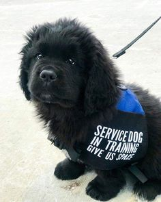 Puppy Care, Pet Puppy, Pet Dogs, Dog Cat, Pets, Baby Puppies, Cute Puppies, Psychiatric Service Dog, Cute Small Animals