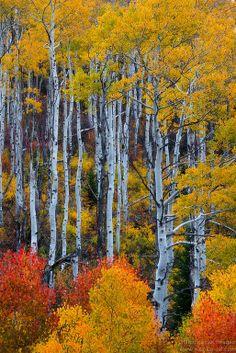 ~~Eye Candy - Fall Foliage in Colorado, San Juan Mountains by Nitin Kansal~~