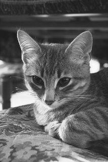 Gatto | Flickr - Photo Sharing!