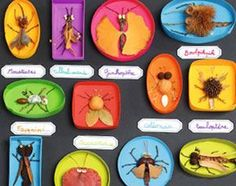 Des Petits Insectes Insectes Spring Crafts For Kids