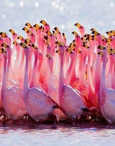 Not that I saw very many flamingos but now I want to see them.