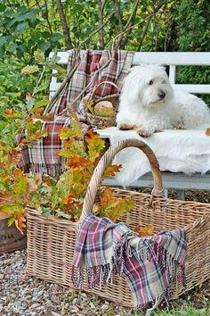 Autumn's Paint Brush..~LadyLuxury~