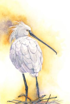 Spoonbill print of watercolor painting S2015  A4 by LouiseDeMasi