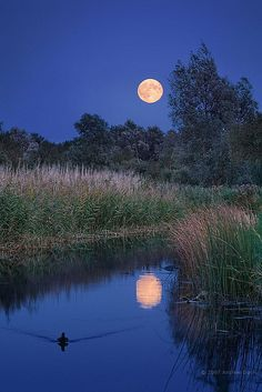 agoodthinghappened:  Moonrise over Wicken Fen by . Andrew Dunn . on Flickr.