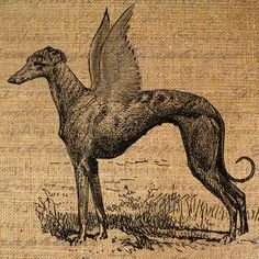 Greyhound as Winged Pegasus Dog Angel Puppy Digital Image Download Sheet Transfer To Pillows Totes Tea Towels Burlap No. 1671