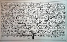 Use this Blank Family Tree with stylized leaves to gather and show details about your loved ones. Free to obtain and print Free Family Tree Templates in PDF Blank Family Tree, Family Tree Art, Free Family Tree, Genealogy Chart, Family Genealogy, Genealogy Forms, Family Tree Designs, Family Tree Projects, Family Tree Templates