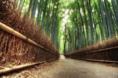 """""""Each day is a journey, and the journey itself is home""""  Matsuo Basho  Sagano Bamboo Forest at Arashiyama, Kyoto"""