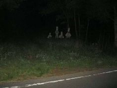 "spookymrsboo:From r/creepy: ""I was driving down a woodsy back road in the mountains when I saw something out the corner of my eye. Arte Horror, Horror Art, Images Terrifiantes, Lila Baby, Creepy Pictures, Scary Photos, Southern Gothic, Cursed Images, Aesthetic Grunge"