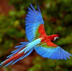 #Fauna #Venezuela
