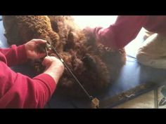 ▶ Noodling alpaca fleece 2012 - YouTube