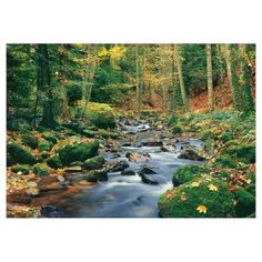 Brewster Forest Stream Wall Mural - DM278