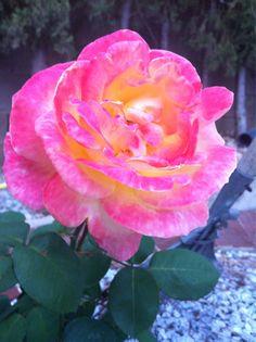 Les roses aquarel·loses
