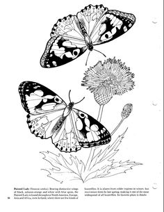 Pretty And Informative Butterfly Coloring Page Courtesy Dover Inkspired Musings Butterflies