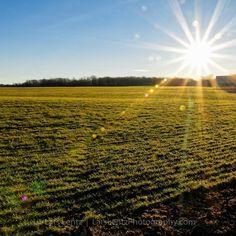 Spring Sunrise  #photography #photo #scenic #beautiful #landscape #sunrise #Michigan #green #blue #wheat #field #travel #puremichigan #rural