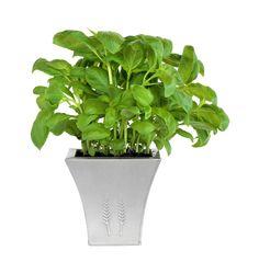 potted plant google s gning props setpieces pinterest. Black Bedroom Furniture Sets. Home Design Ideas