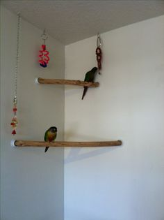 ♥ Pet Bird Stuff ♥ The white plastic hardware, used to put the perches up, are made to hang closet poles and can be purchased inexpensively at your local hardware store  -   It's conure corner perch! Bird-proofing your house means having safe perches available for your parrot to fly towards.