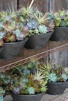 A seriously covetable collection of #succulents in #pots