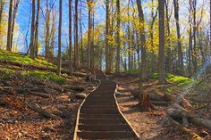 This hiking trail near Toronto comes with 99 steps 99 Steps, Newmarket Ontario, Outdoor Workouts, Hiking Trails, Railroad Tracks, Toronto, Stage, Universe, Country Roads