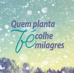 Quem planta fé, colhe milagre. #mensagenscomamor #milagres #planta #fé #colhe #milagres #frases