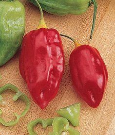 Hot Caribbean Red Pepper Seeds and Plants, Vegetable Gardening at Burpee.com