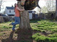 animal photobomb cat in tree