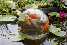 Fish bowl in pond.wouldn't this be cool in a garden? But how do you feed the fish?