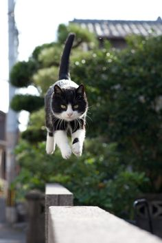 """knives777:  Flying Kitteh comes in for a landing!   """