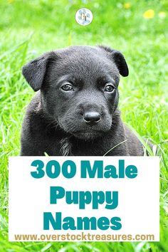 Hello pet lovers, dog lovers Are you a new pet owner? Did you just get a cute puppy or cute dog? Congrats! I created a list of unique dog names male list. You are welcome to have my wonderful list of dog names boy unique list. This list is also for dog male names for puppies. They are super cute puppy names male. I love these male dog names / dog boy unique list.#puppy #puppynames #names #dognames #dog #doglove Cute Male Dog Names, Unique Cat Names, Cute Puppy Names, Pet Loss Grief, Loss Of Dog, Pet Memorial Gifts, Cat Memorial, Cat Care Tips, Dog Care