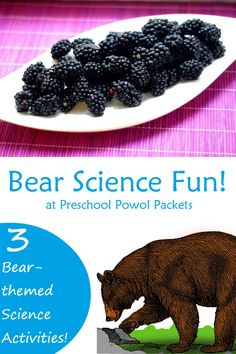 Bear science experiments and a bear snack! This science project is perfect for a preschool bear theme, hibernation unit, teddy bear day, or just for fun! Bear Activities Preschool, Bear Theme Preschool, Preschool Themes, Nursery Activities, Preschool Classroom, Teddy Bear Crafts, Teddy Bear Day, Teddy Bears, Preschool Programs
