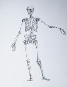 Anatomy Drawings by Megan McDonald, via Behance