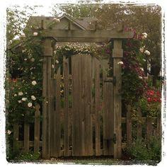 TBT ... Summer  #RoseChat #rosesofinstagram #garden_styles #roses #eye4flowers #mygarden #gardengates #gatedcommunity
