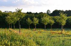 Les plantations de châtaigniers autour des vergers