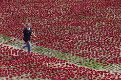 英ロンドン(London)で、第1次世界大戦(World War I)開戦100年に合わせ、ロンドン塔(Tower of London)前に磁器製の赤いポピーを配置していくボランティアたち(2014年8月3日撮影)。(c)AFP/JUSTIN TALLIS ▼4Aug2014AFP|ロンドン塔埋め尽くす赤いポピー、第1次大戦100年 http://www.afpbb.com/articles/-/3022204 #poppy #WWI #Blood_Swept_Lands_and_Seas_of_Red