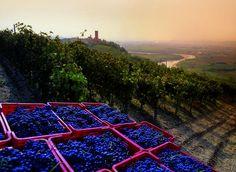 The Vineyard Landscape of Piedmont: Langhe-Roero and Monferrato, Italy. inscription in 2014. Criteria: (iii)(v)
