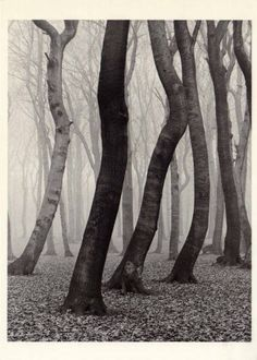Albert Renger-Patzsch, Forest in Autumn, 1936